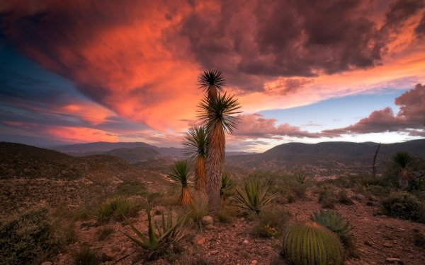 Earth Desert Nature Cactus Cloud Landscape HD Wallpaper | Background Image