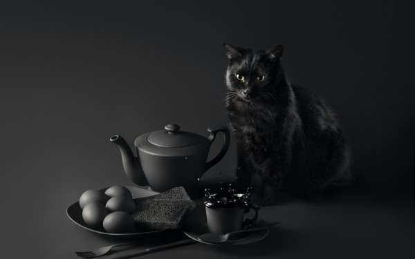 Animal Cat Cats Pet Black & White Teapot Cup HD Wallpaper | Background Image