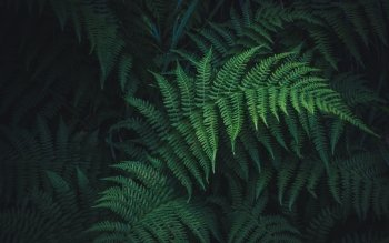 61 Fern Hd Wallpapers Background Images Wallpaper Abyss