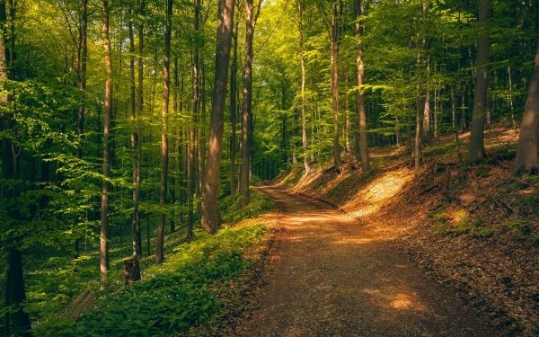 Earth Forest HD Wallpaper | Background Image